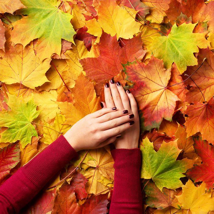 Autumn Sedums