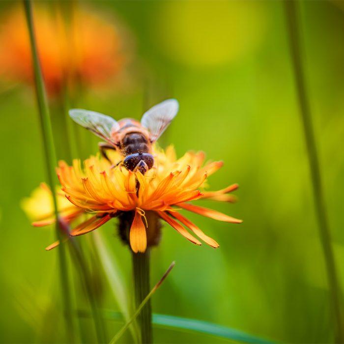 Bees, Bees, Bees….