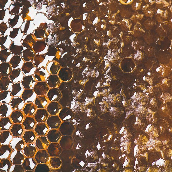 Honey Bees at Secretts