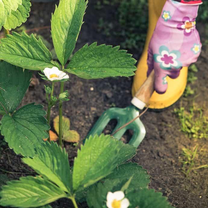 gardening | Cathie's Gardening School