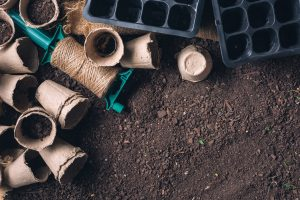 Biodegradable peat pot on greenhouse compost humus soil